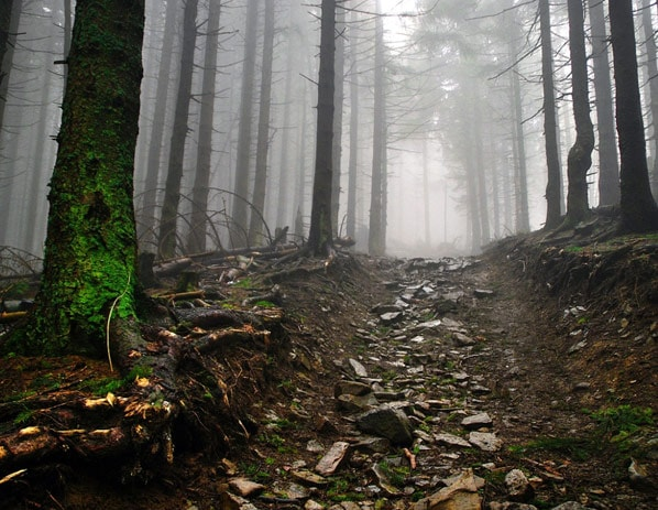 decorative image of forest path in fog